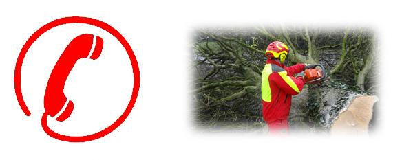 Einsatz 4/2020: Baum auf Strasse